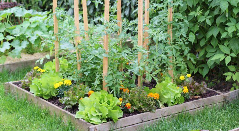 9-plantes-pour-cultiver-un-potager-carre_5560039